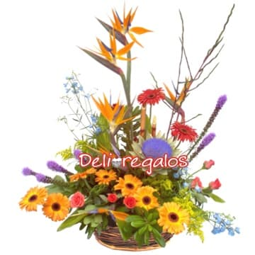 i-quiero.com - Arreglo de flores Tropicales - Codigo:AGF19 - Detalles: Espectacular arreglo floral en base de mimbre compuesto por gerberas, azucenas, iris, boton de oro, claveles, flores y follaje de estacion.  - - Para mayores informes llamenos al Telf: 225-5120 o 476-0753.