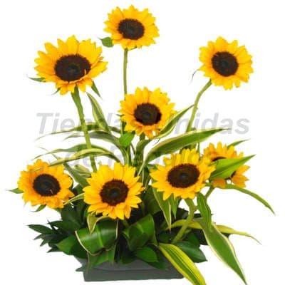 Arreglo de  Girasoles | Arreglos Florales con Girasoles | Arreglo de Girasoles - Cod:XGR16